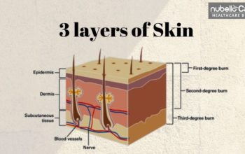 3 Layers of Skin and Their Functions