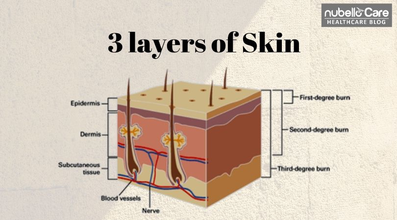 3 layers of skin