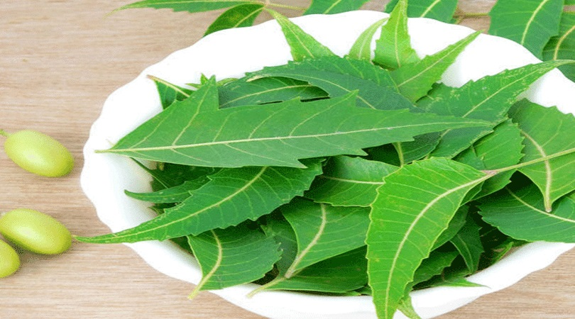 Neem Herb For Weight Loss